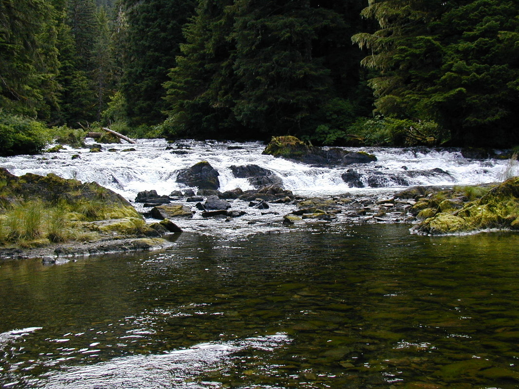blog posts america s salmon forest click here to the essay
