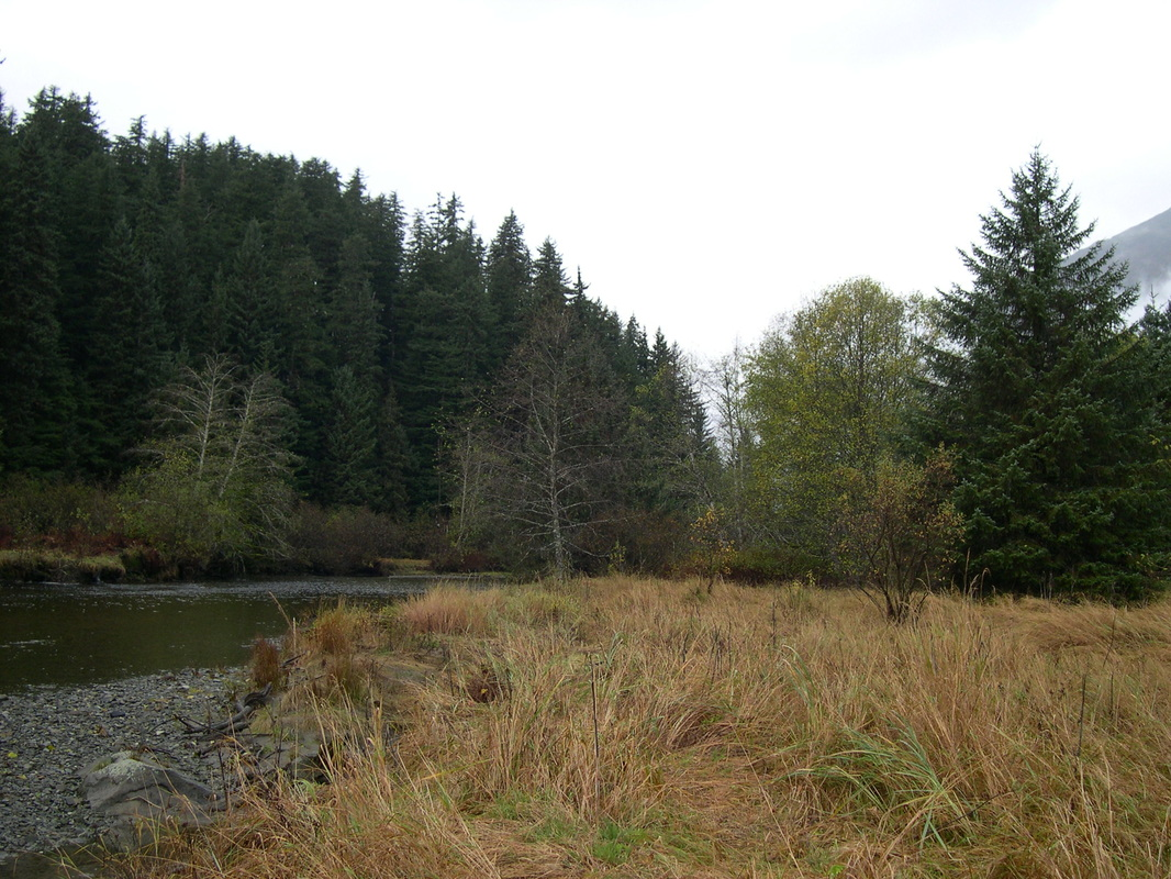 blog posts america s salmon forest this essay is part of an ongoing blog series on the tongass national forest featuring the healthy productive waters of the tongass 77